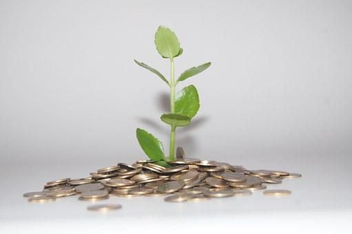 plant groeit geld natuurlijk